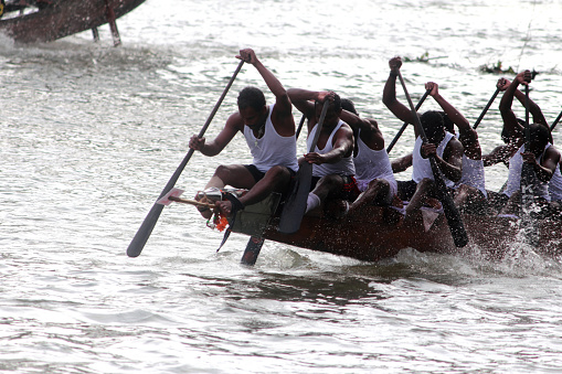 Thiruvalla, India-September 09, 2011: Oarsmen of a snake boat team row aggressively in the Pumba Boat race