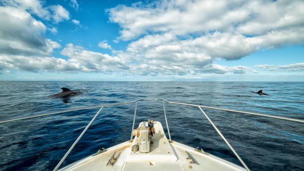 Boat trip on Tenerife stock photo