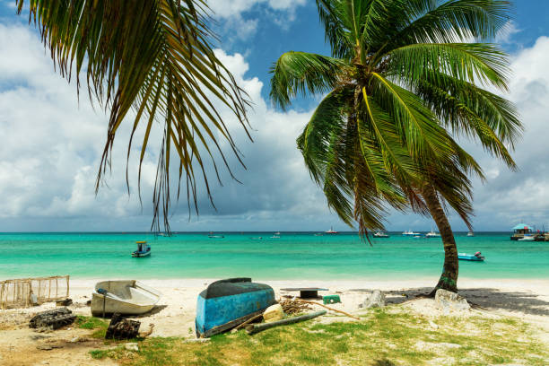 Boats and palm trees behind Oistins Fish Market in Barbados stock photo