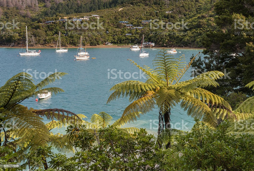 boats moored in Queen Charlotte Sound stock photo