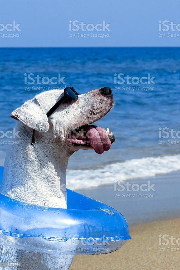 Bob on the beach in Paradise royalty-free stock photo