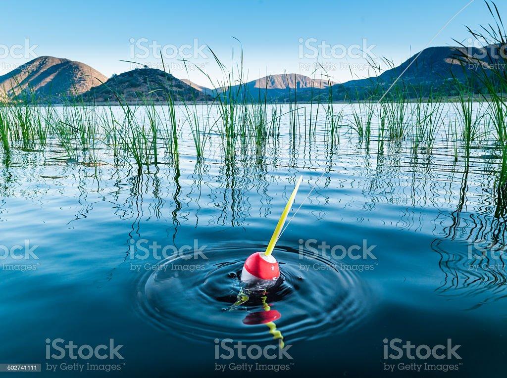 Pesce Bobber su - foto stock