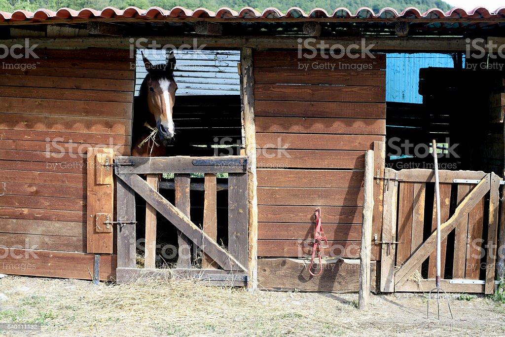 Bobbio (Italia). Cavallo nella sua stalla - foto stock