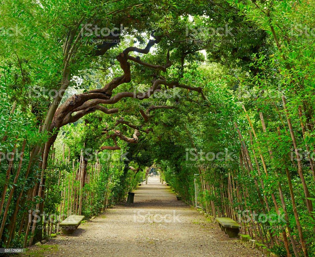 Boboli Gardens. Florence Italy stock photo