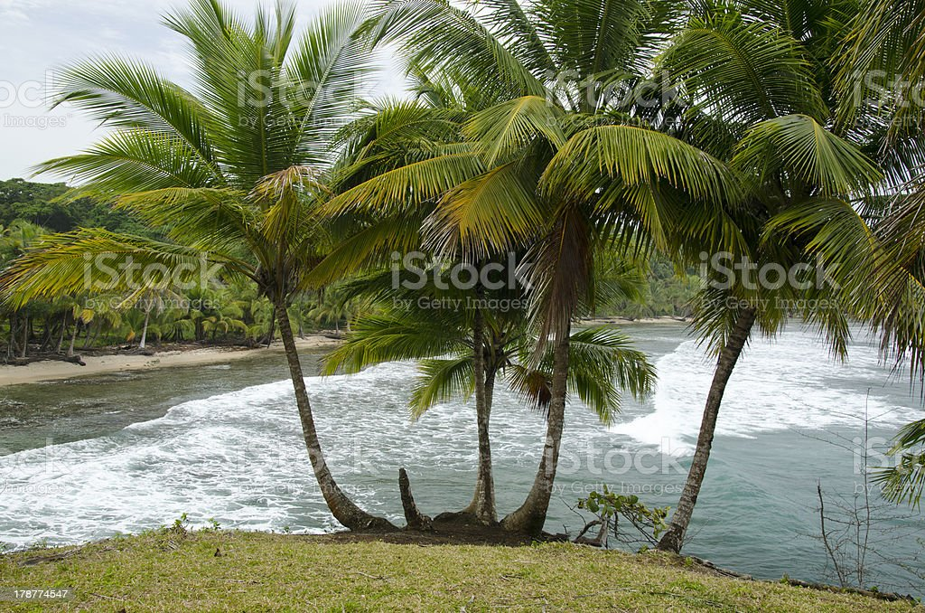 Bocas del Toro archipelago royalty-free stock photo