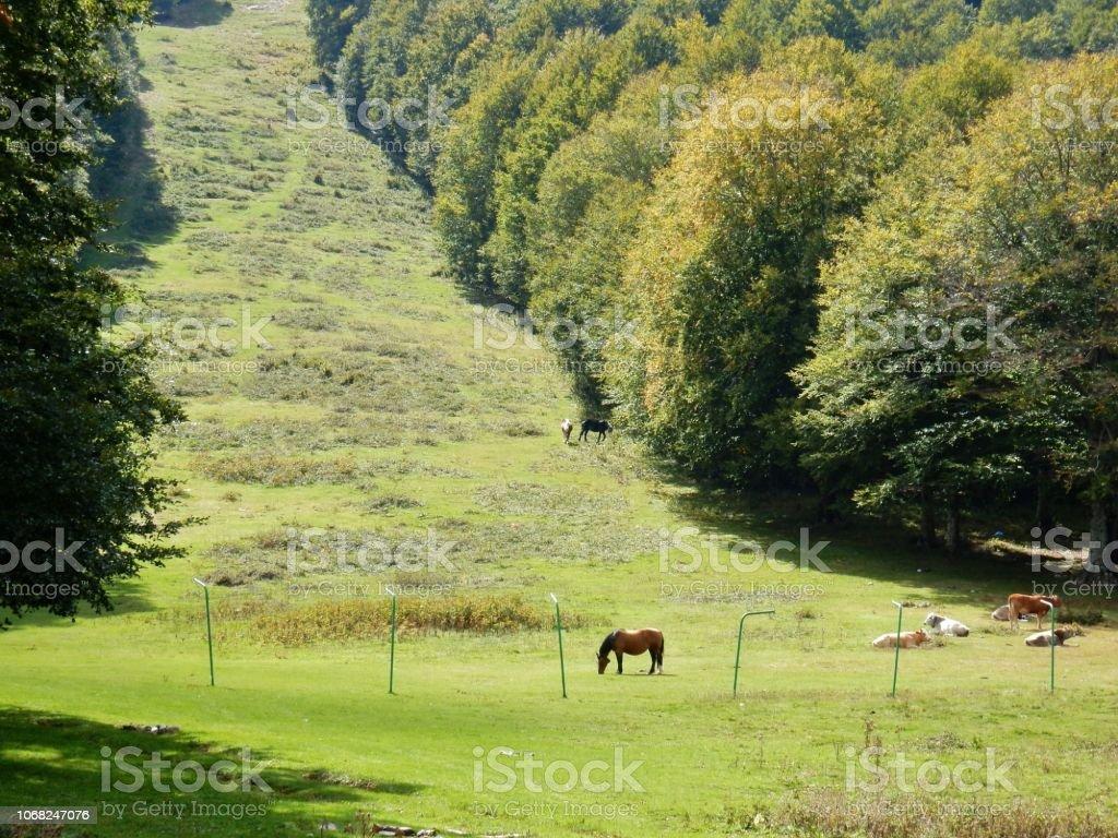 Bocca della Selva - Cavallo al pascolo - foto stock