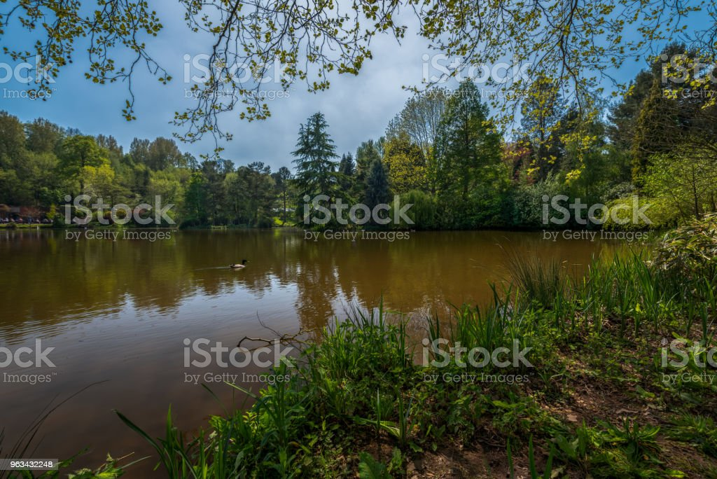 Bodenham Arboretum IV. stock photo