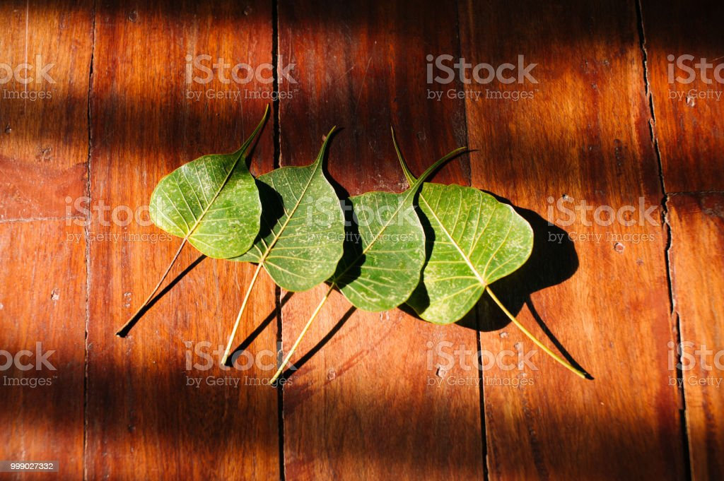 Bodhi tree leaves on the wooden texture background stock photo