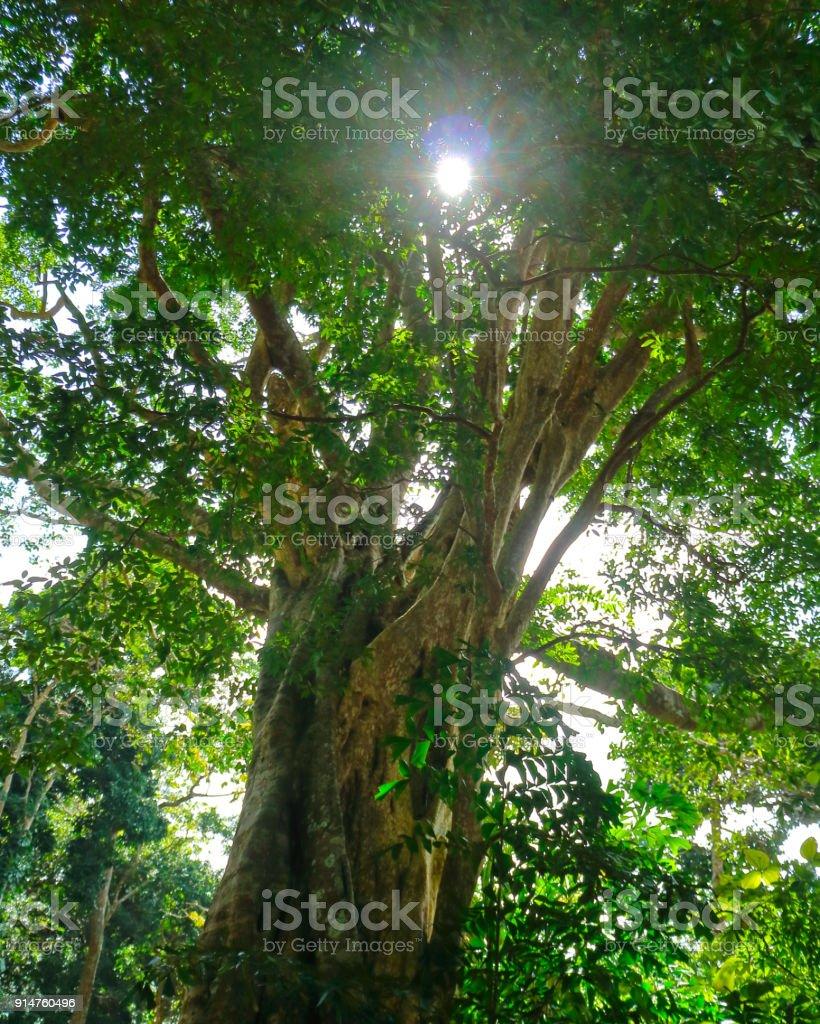 Montaña de Ta ku del árbol de Bodhi en Vietnam - foto de stock