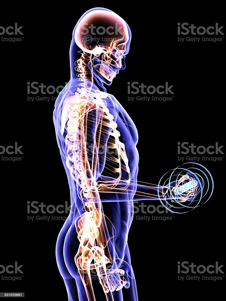 Body Builders Anatomy And Healty Lifestyle Stock Photo & More ...