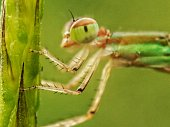 Body part or damselfly on plant
