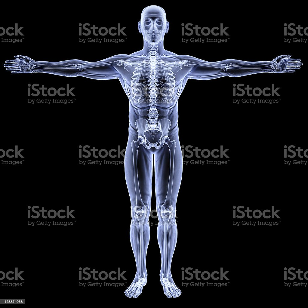 body stock photo