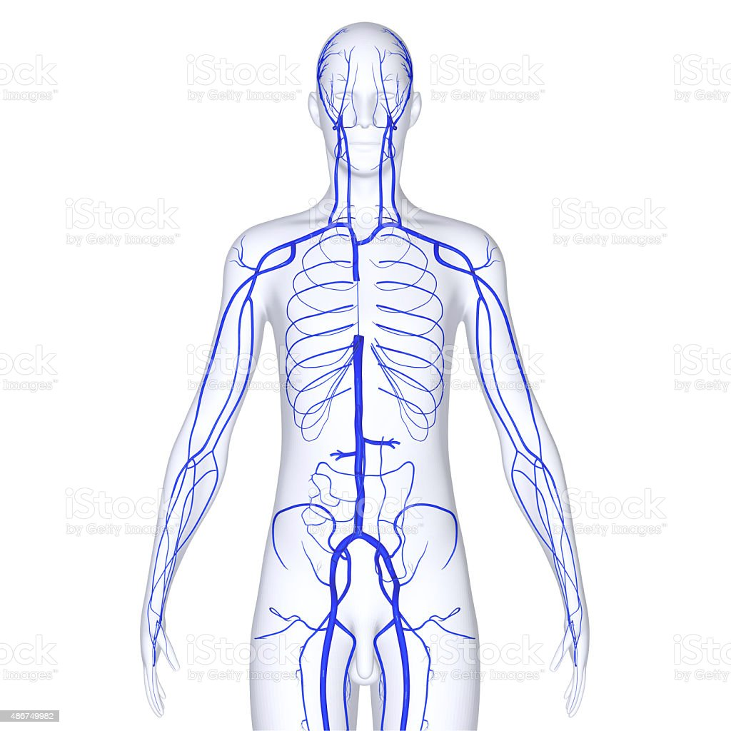 Body with Veins stock photo