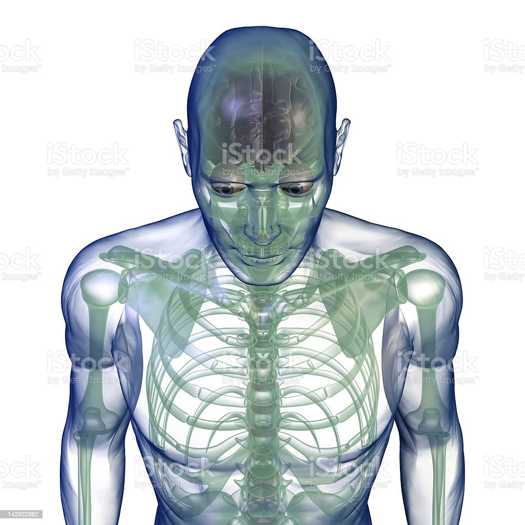 body x-ray from above on white stock photo