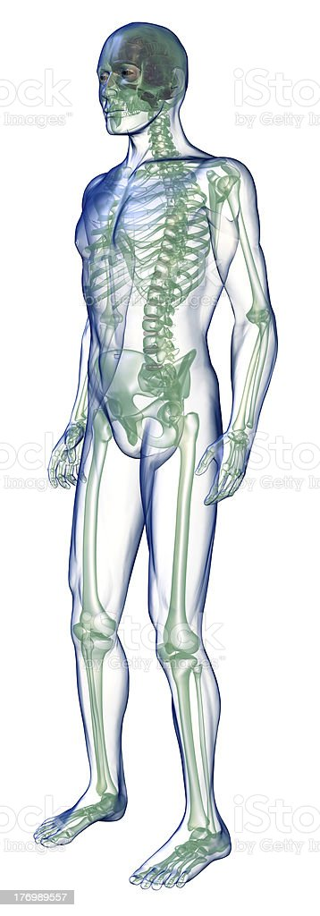 body x-ray perspective from below on white royalty-free stock photo