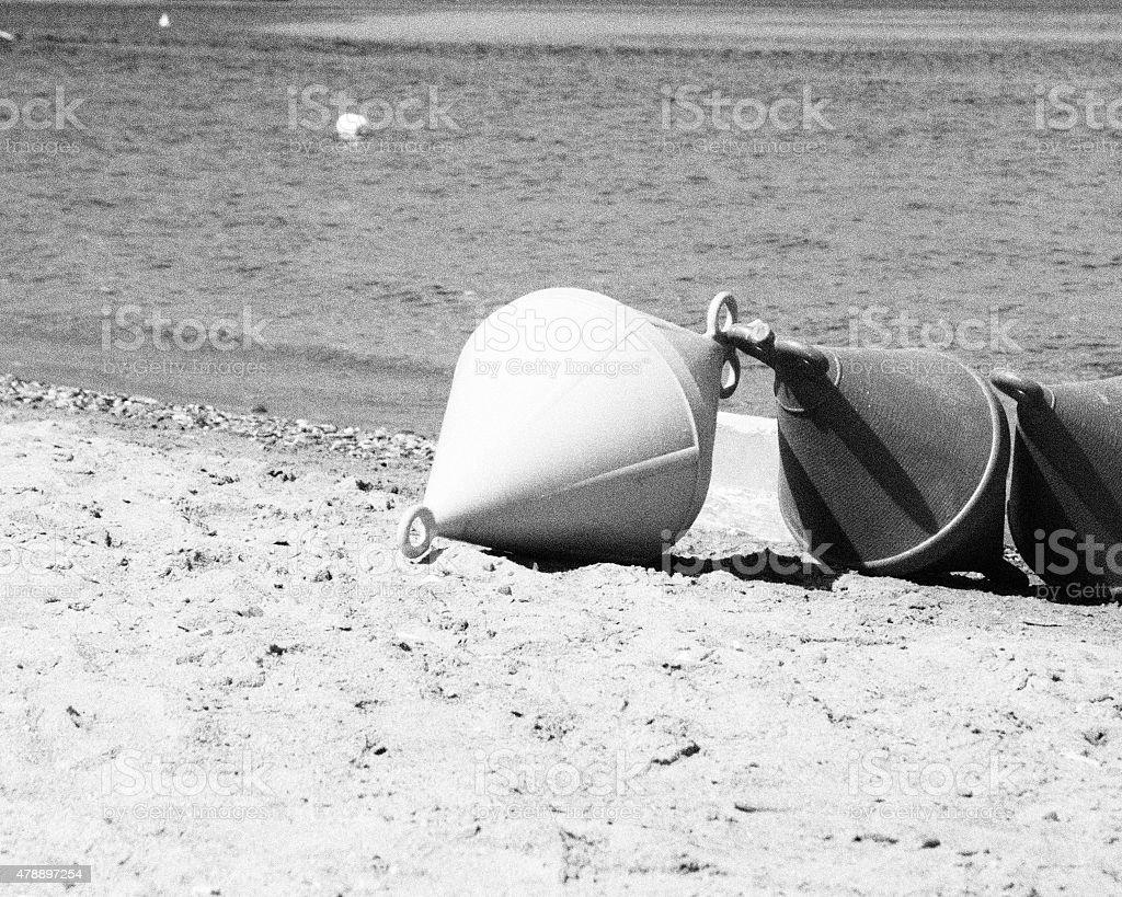 Boe sulla spiaggia in bianco e nero stock photo