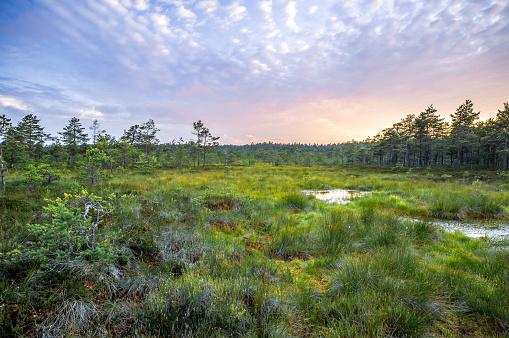 Bog at Sunset, Finland