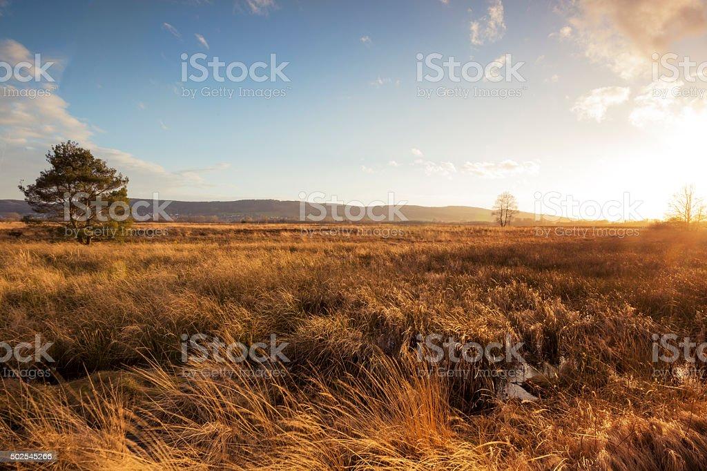 Moor im Herbst – Foto