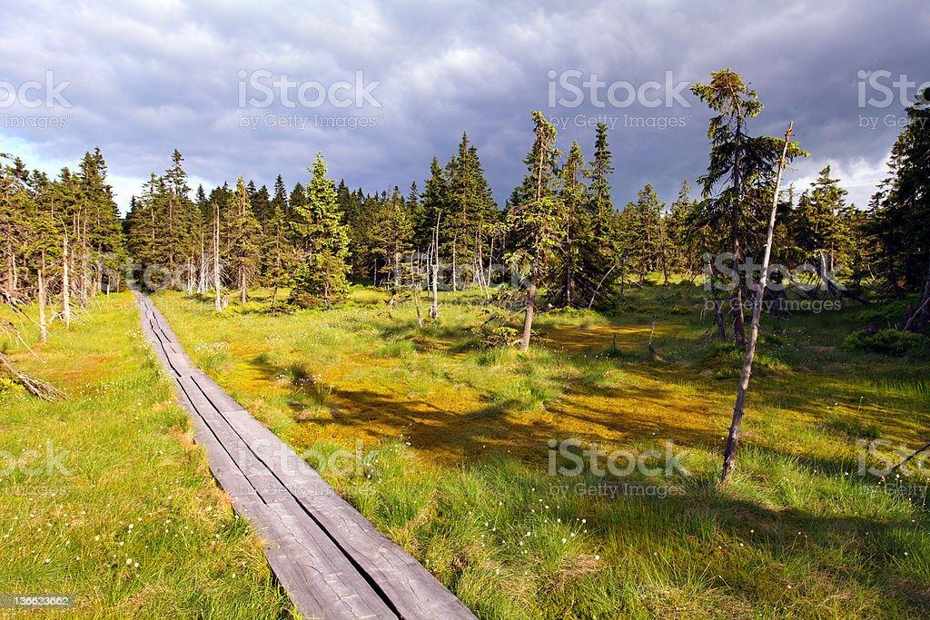 Bog in Krkonose national park stock photo