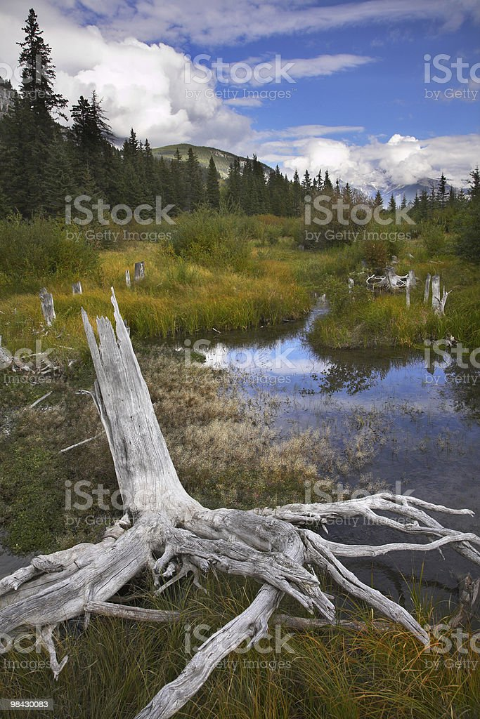 Bog in  mountains and snags on coast royalty-free stock photo