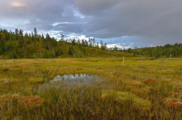 Bog landscape in northern Finland. stock photo