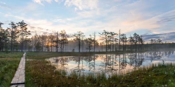 Marécage paysage du matin - Photo