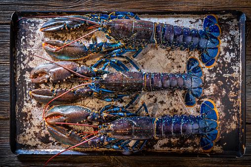 Bogavante azul or European lobster blue color raw seafood three in a row