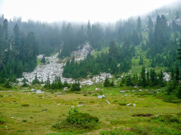 Boggy area at Lake Valhalla in Washington state stock photo