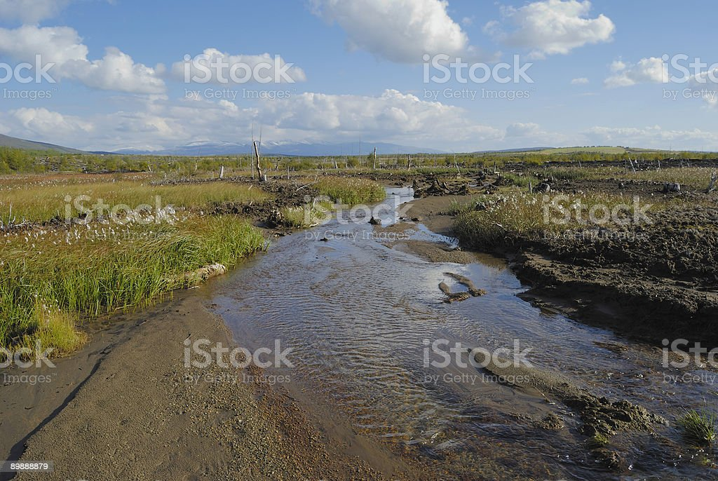 Boggy coast of the creek royalty-free stock photo