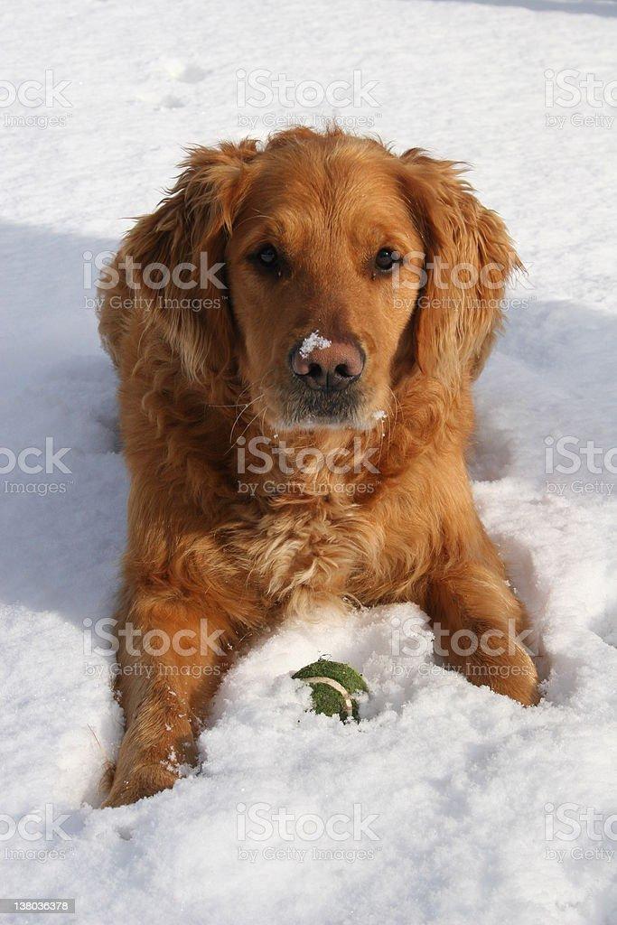 Bogo in snow stock photo