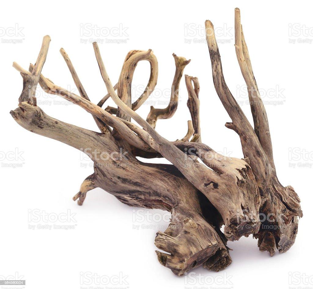 Bogwood stock photo