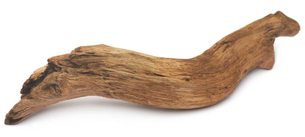 Bogwood Bogwood over white background driftwood stock pictures, royalty-free photos & images