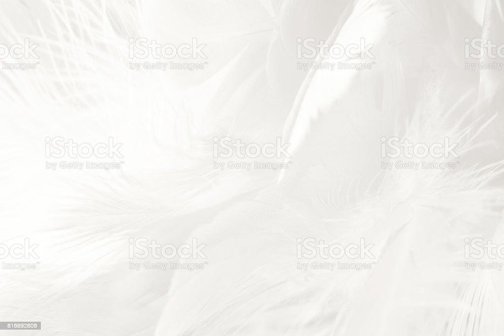 Boho boêmio estilo vintage cor tendências, preto e branco pluma textura de fundo - foto de acervo