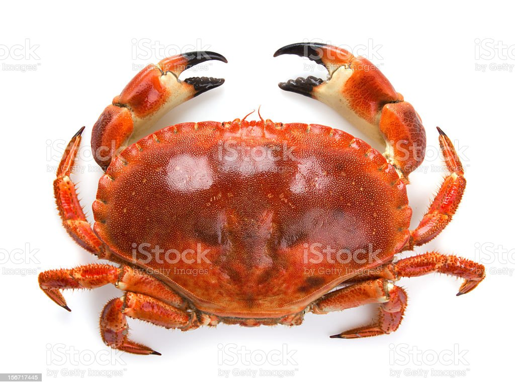 Boiled crab stock photo