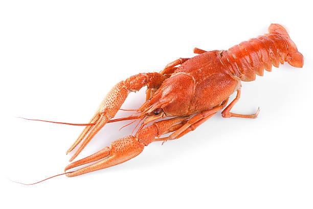 Gekochte crawfish – Foto