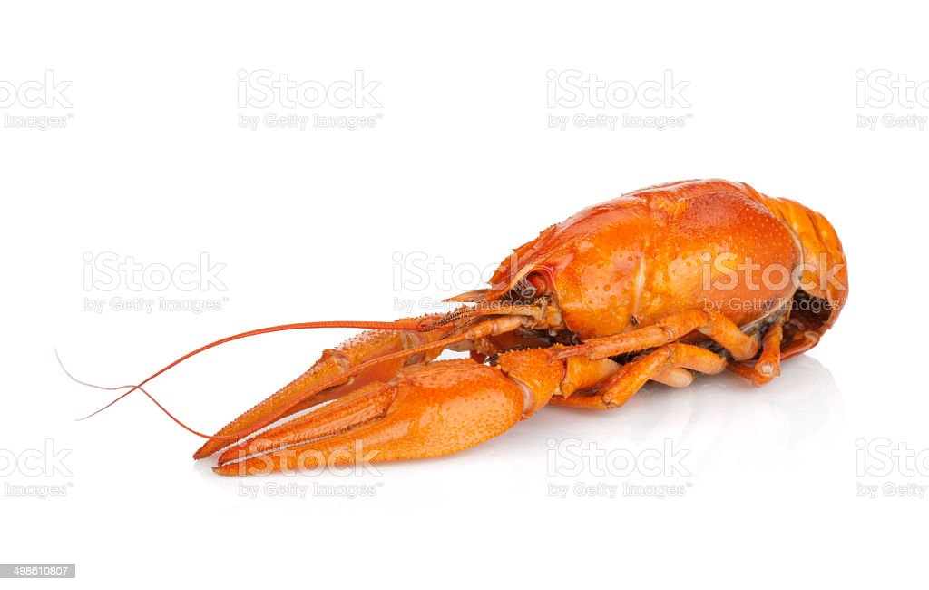 Boiled crayfish royalty-free stock photo