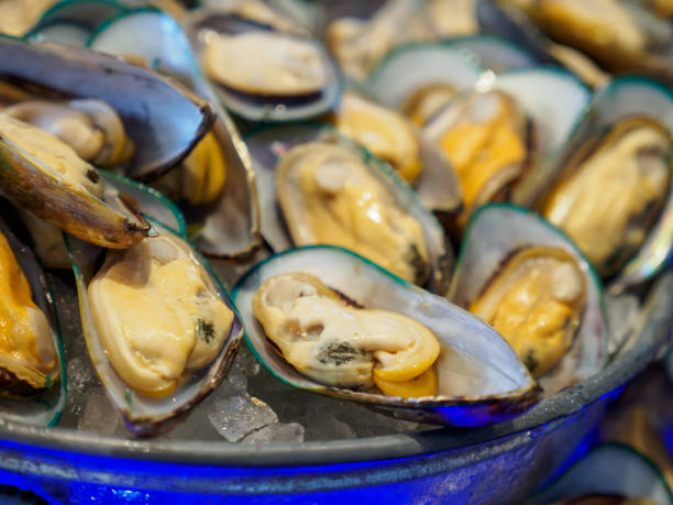 Boiled green-lipped New Zealand mussels in ice bowl stock photo