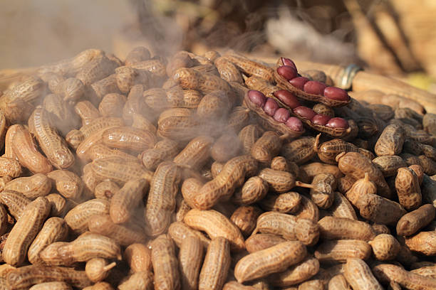 Boiled peanuts with salt stock photo