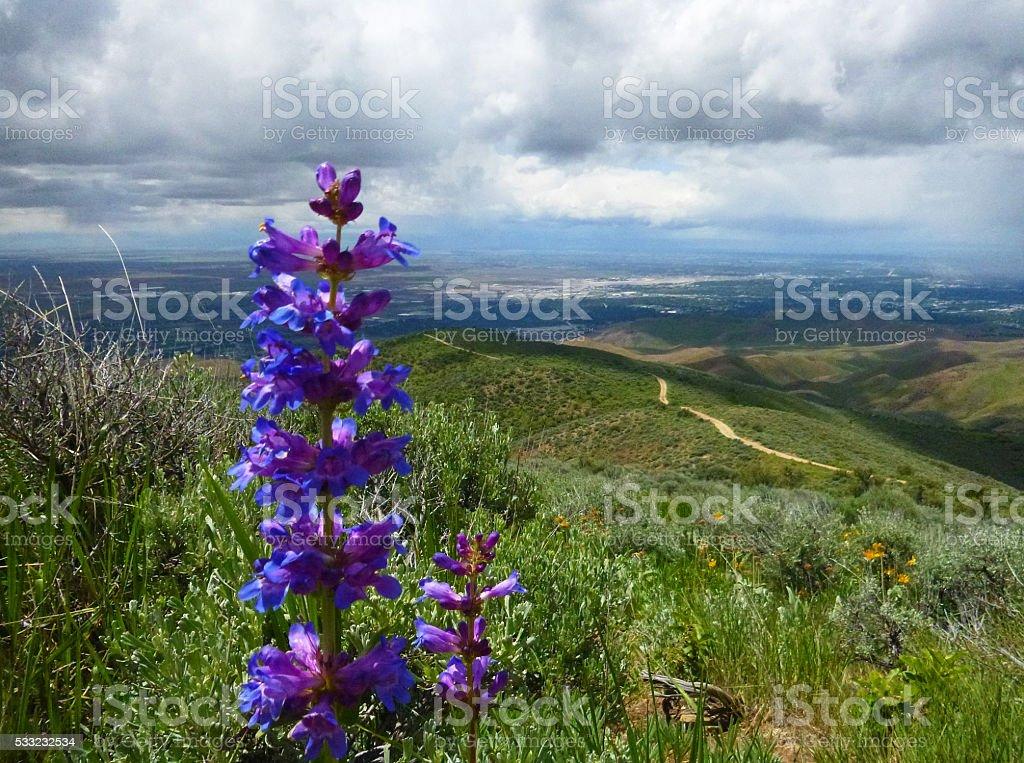 Boise Blues stock photo