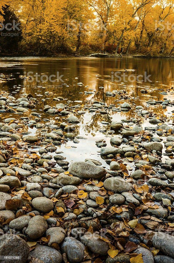 Boise River Autumn royalty-free stock photo