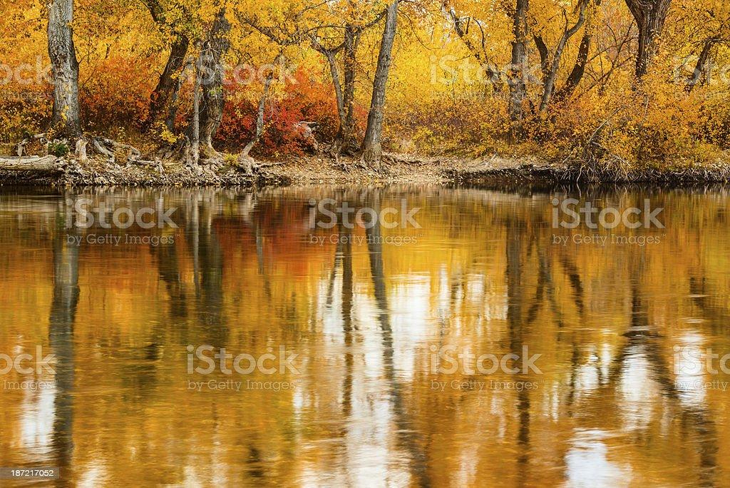 Boise River Autumn stock photo