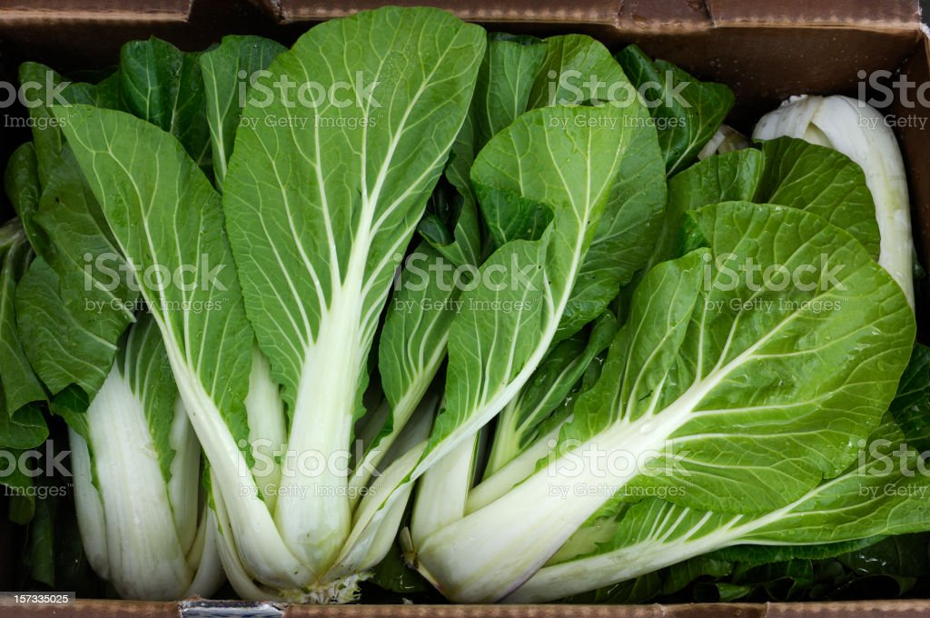 Bok Choy Ready for Shipping royalty-free stock photo