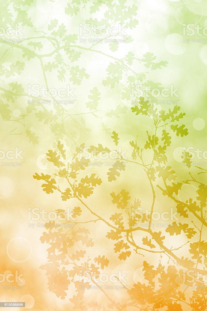 Bokah Leaves Background stock photo