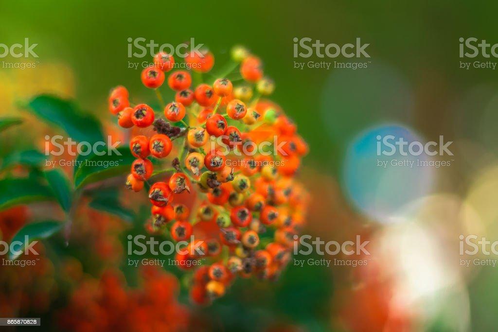 Bokeflower stock photo