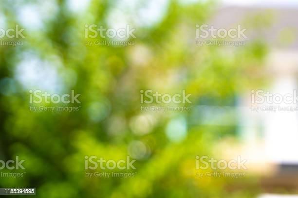 Bokeh background bokeh blurry office green bokeh background picture id1185394595?b=1&k=6&m=1185394595&s=612x612&h=yhjxu6hxcvubdfiycbk7oluuflrc5dzbqq4jakhisvu=