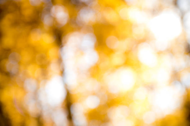 Bokeh Background of Fall Colors stock photo