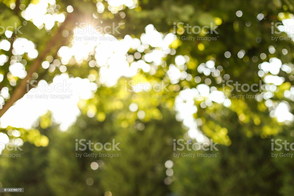 Bokeh Background of Nature stock photo