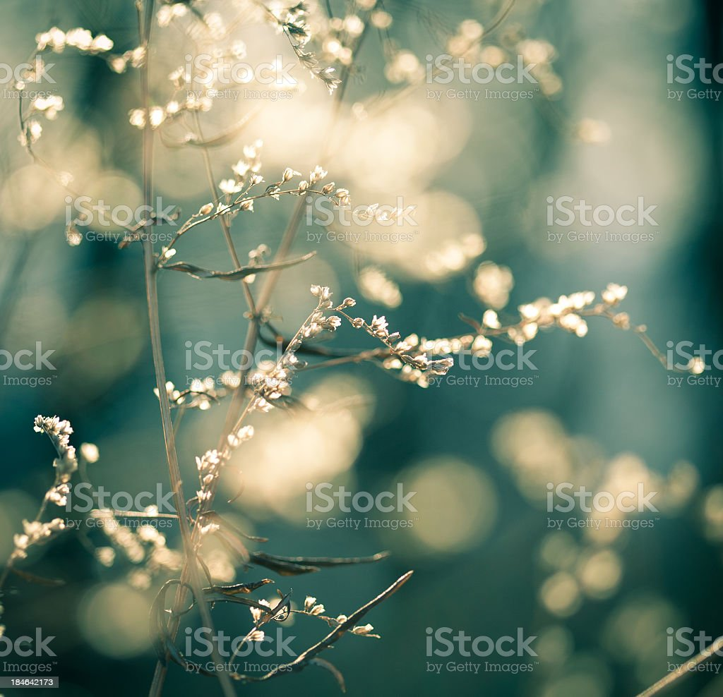 Bokeh effect close-up of wildflowers with blue background royalty-free stock photo
