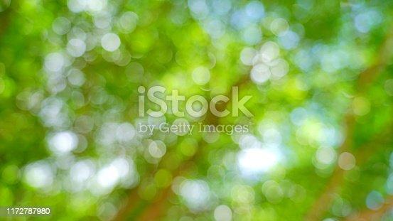 641254964 istock photo Bokeh in nature background 1172787980