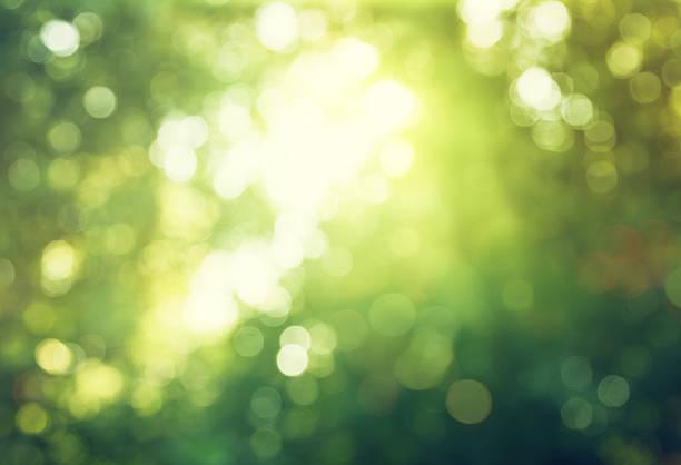ボケの太陽の下で森 - 木漏れ日 ストックフォトと画像
